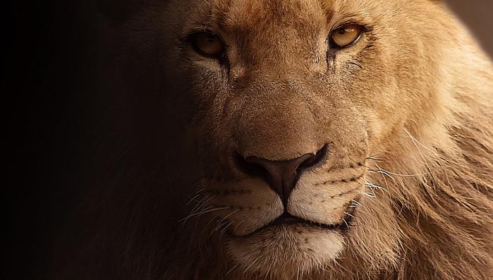 lion-617365_960_720[1] (700x397, 282Kb)
