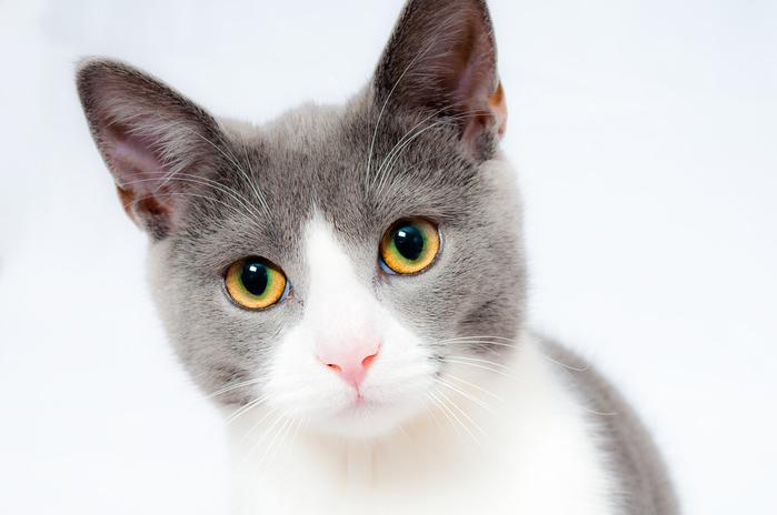 cat-1151519_960_720[1] (700x464, 173Kb)