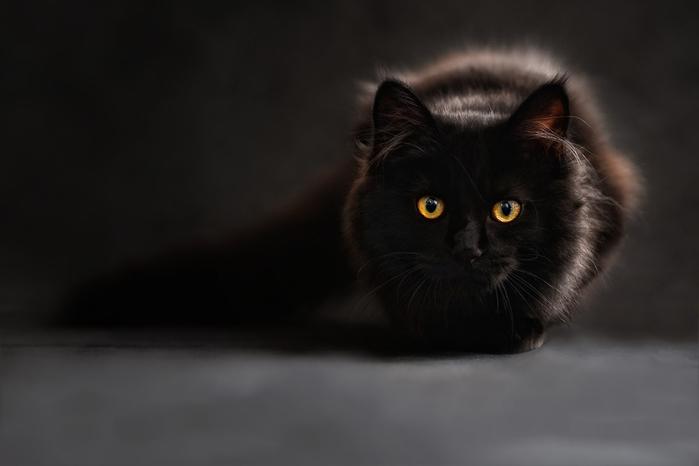 cat-694730_960_720[1] (700x466, 117Kb)