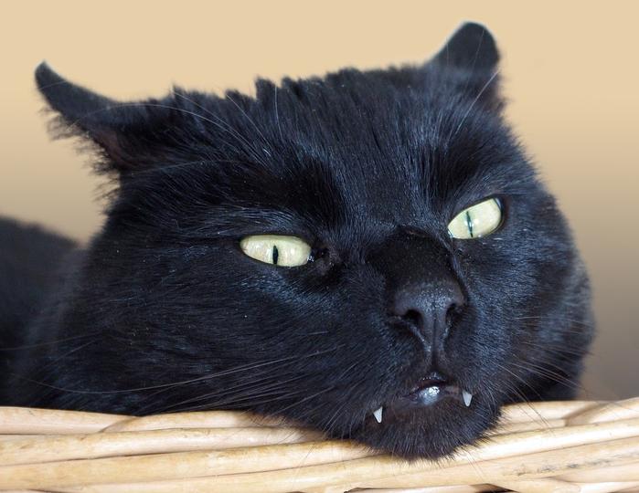 cat-1333323_960_720[1] (700x540, 326Kb)