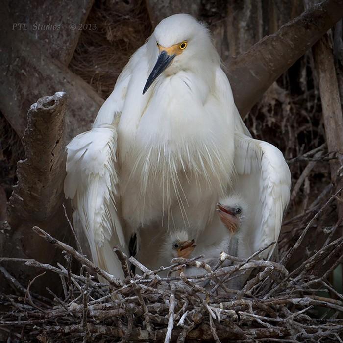 Мир заботливых птиц: 20 ярких фотографий родителей со своими птенцами
