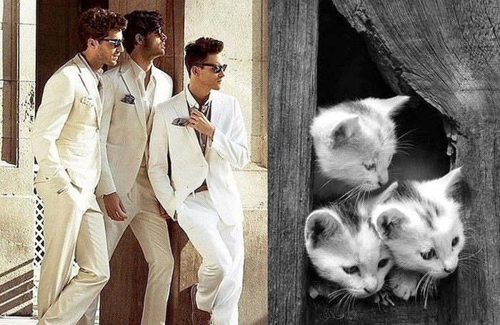 Ты только посмотри! 17+ удивительно похожих брутальных мачо и милых котиков
