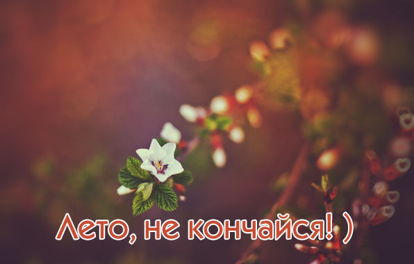 images_17005 (596x380, 48Kb)