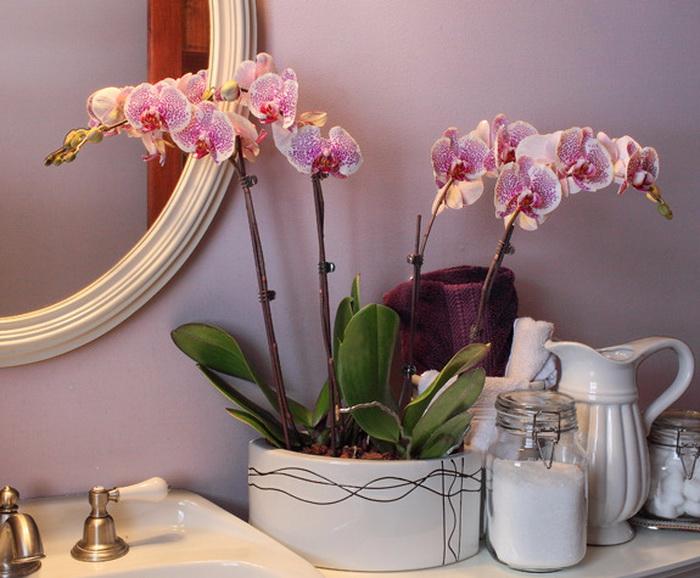 Фото орхидеи в интерьере