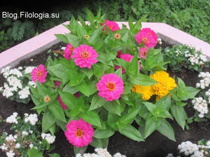 3241858_flowers01 (700x525, 85Kb)