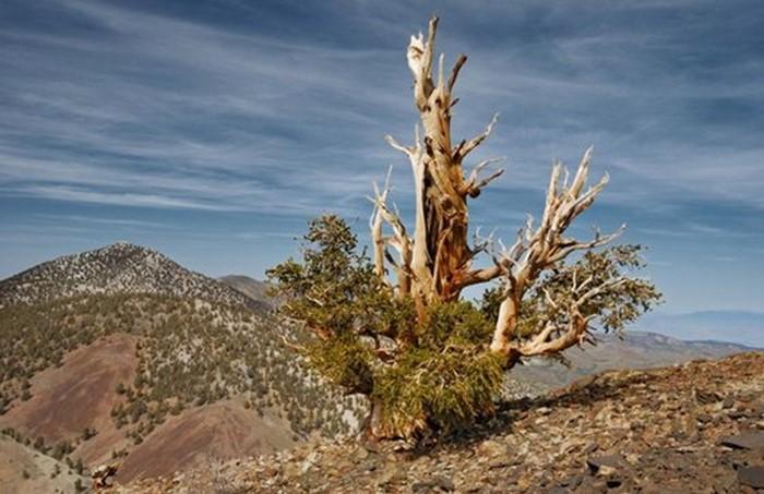 Самые редкие растения в мире   горный эдельвейс и другие
