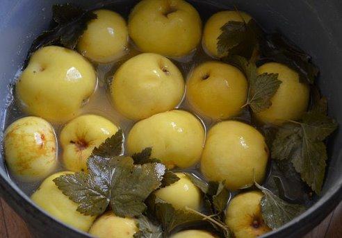 Моченые яблоки. Пять лучших рецептов/1783336_original (492x343, 31Kb)