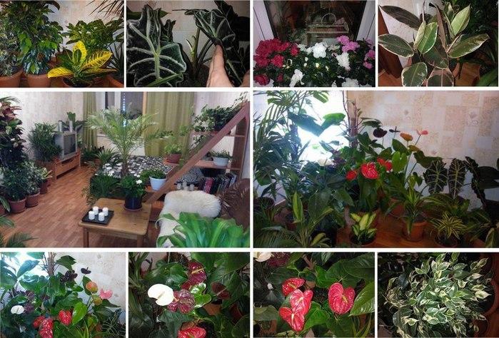 5988810_Natyralnaya_podkormka_dlya_komnatnih_cvetov (700x474, 117Kb)