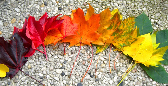 rainbow_of_autumn_by_lani_heartcore (700x359, 376Kb)
