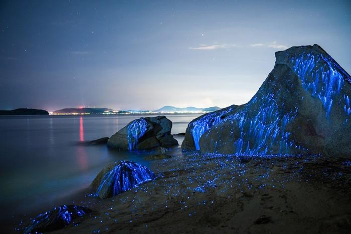 ФОТО: Волшебное свечение у берегов Японии   морские креветки светлячки