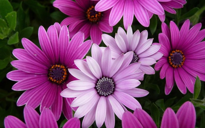 222054__flowers-purple-pink_p (700x437, 66Kb)