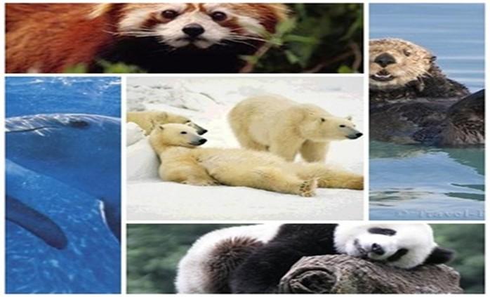 Самые разные фотографии распрекрасных, самых симпатичных и веселых зверей