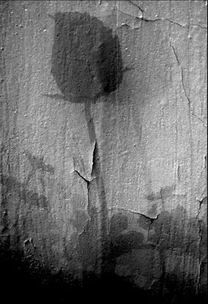 Марат - Чёрная роза (408x594, 99Kb)