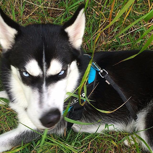 угрюмый пес ануко фото 5 (640x640, 583Kb)