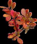 ������ jojo_autumn_forest_elementt_30 (503x600, 370Kb)