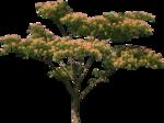 ������ jojo_autumn_forest_elementt_38 (600x449, 309Kb)