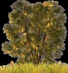 ������ jojo_autumn_forest_elementt_40 (559x600, 959Kb)