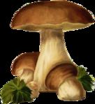 ������ jojo_autumn_forest_elementt_41 (341x374, 232Kb)