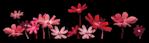 ������ jojo_autumn_forest_elementt_43 (671x194, 154Kb)