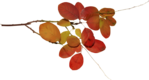 ������ jojo_autumn_forest_elementt_49 (600x323, 147Kb)