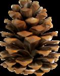 ������ jojo_autumn_forest_elementt_59 (279x350, 209Kb)