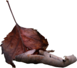 ������ jojo_autumn_forest_elementt_76 (250x224, 67Kb)
