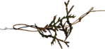 ������ jojo_autumn_forest_elementt_78 (600x282, 100Kb)