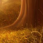������ jojo_autumn_forest_paper_10 (700x700, 498Kb)