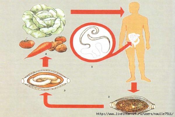 смесь трав от паразитов в организме