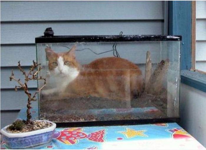 ловят рыбу в аквариуме