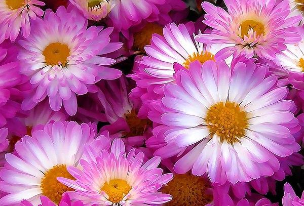 Обои для рабочего стола август природа цветы