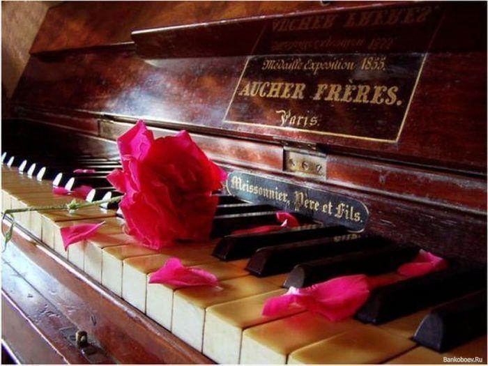 111043190_BankoboevRu_pianino_i_roza (700x525, 62Kb)