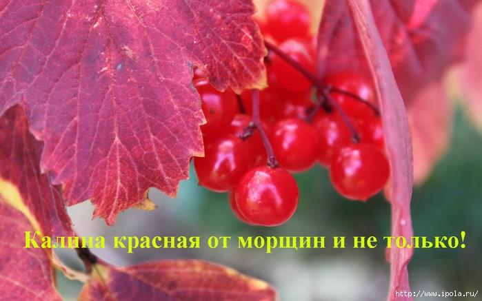 """alt=""""������ ������� �� ������ � �� ������!""""/2835299_Kalina_krasnaya_ot_morshin_i_ne_tolko (700x437, 218Kb)"""