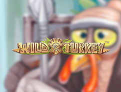 Wild-Turkey (242x184, 38Kb)