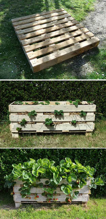 12-Creative-DIY-Pallet-Planter-Ideas-for-Spring-Strawberry-Pallet-Planter (338x700, 350Kb)