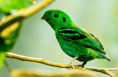 основных птица с длинной шеей зеленая объявления работе