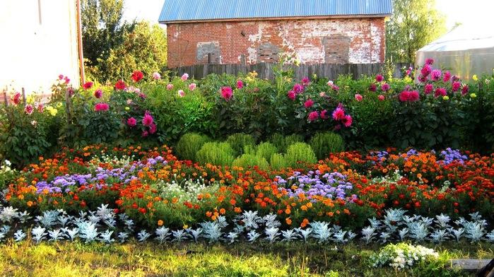 Цветы на даче сибирь