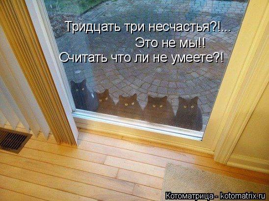 kotomatritsa_- (1) (548x410, 257Kb)