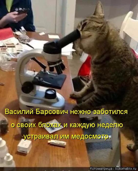 kotomatritsa_0 (565x700, 378Kb)