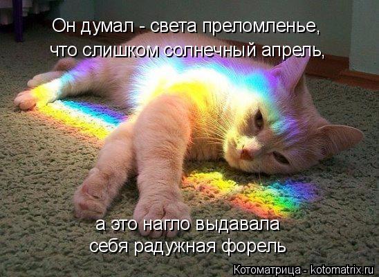 kotomatritsa_7 (548x400, 244Kb)