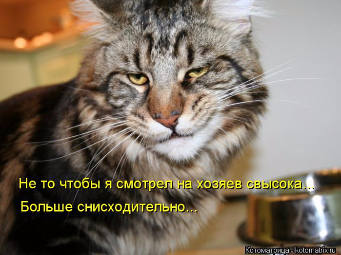 kotomatritsa_Bm (700x524, 342Kb)