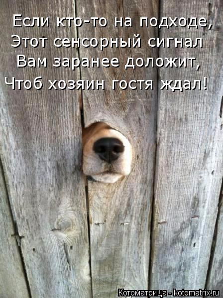 kotomatritsa_Ce (448x600, 239Kb)