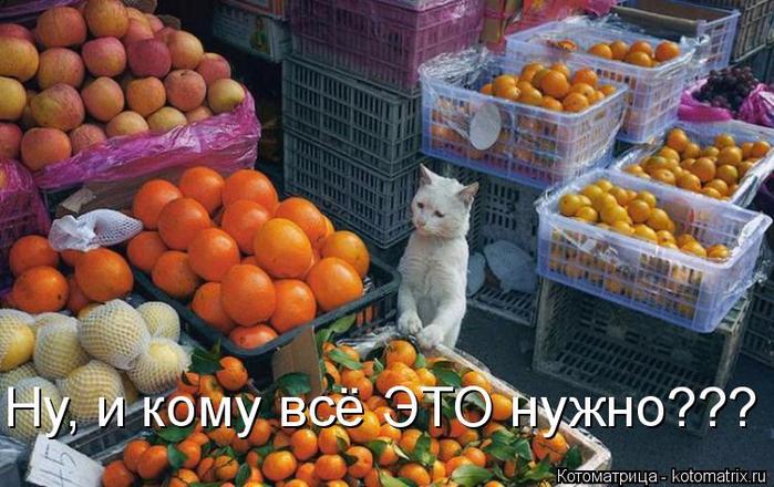 kotomatritsa_Eq (700x440, 387Kb)