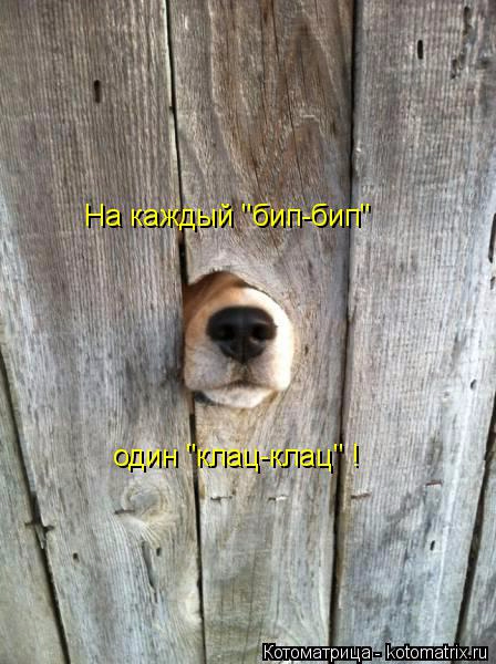kotomatritsa_j (448x600, 220Kb)