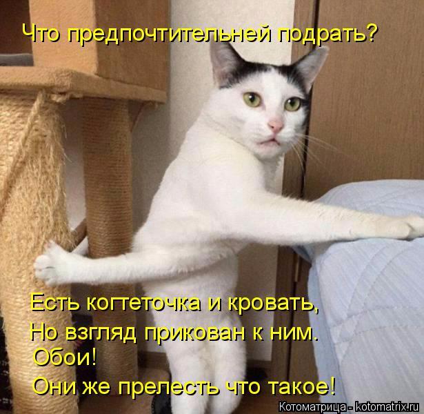 kotomatritsa_m (2) (615x600, 305Kb)