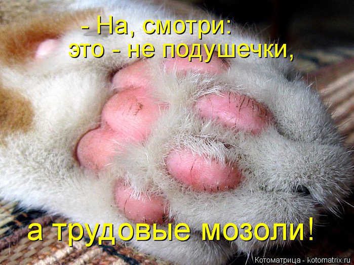 kotomatritsa_M5 (700x524, 438Kb)