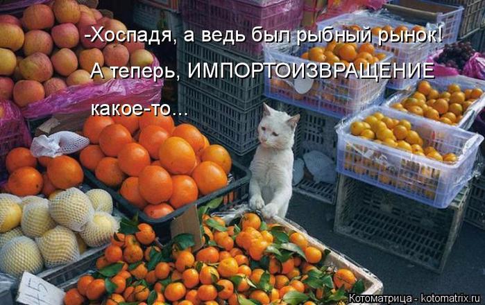 kotomatritsa_oM (700x440, 394Kb)