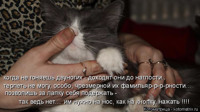 kotomatritsa_p (1) (700x392, 262Kb)