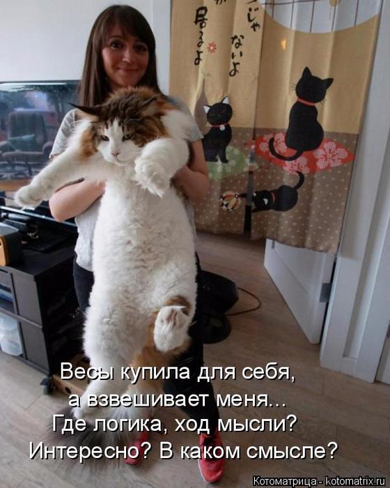kotomatritsa_t (560x700, 350Kb)