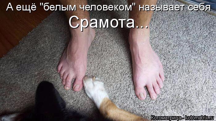 kotomatritsa_V (2) (700x394, 266Kb)